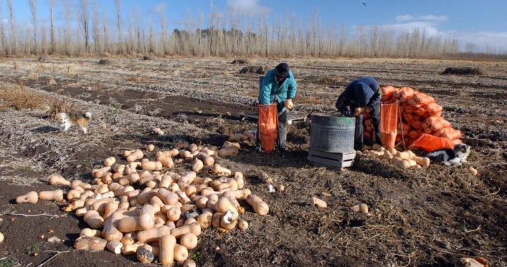 La inestabilidad económica obliga a bolivianos de la región a volver a sus orígenes
