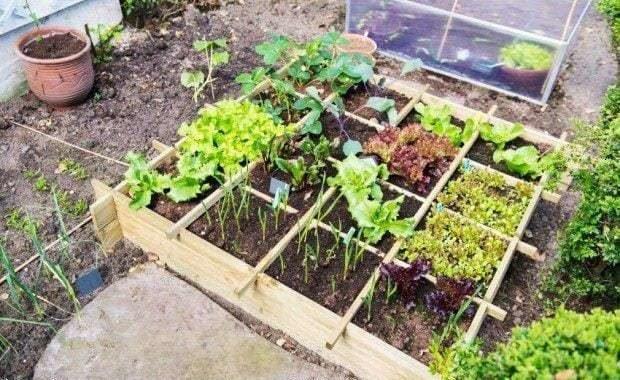 Cómo iniciar tu propia huerta durante la cuarentena y qué sembrar