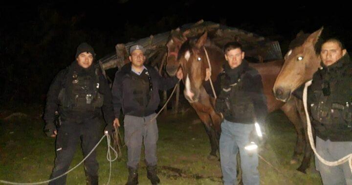 Personal Policial Recuperó Cuatro Caballos En El Límite Con Chile